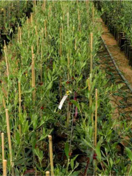 elian nursery plant 3