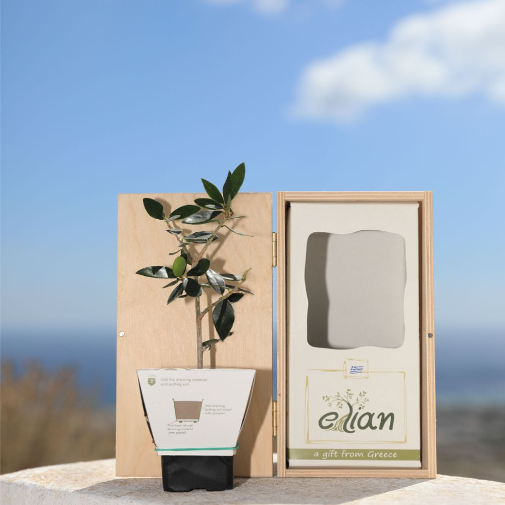 Ξύλινο Κουτί Δώρου Έλιαν