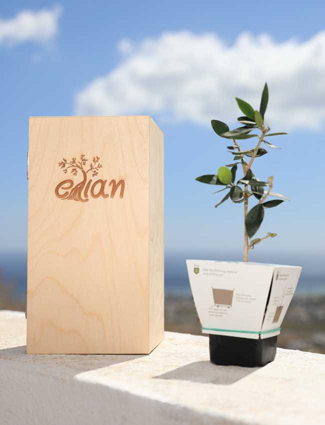 Ξύλινο Κουτί Δώρου Έλιαν 2