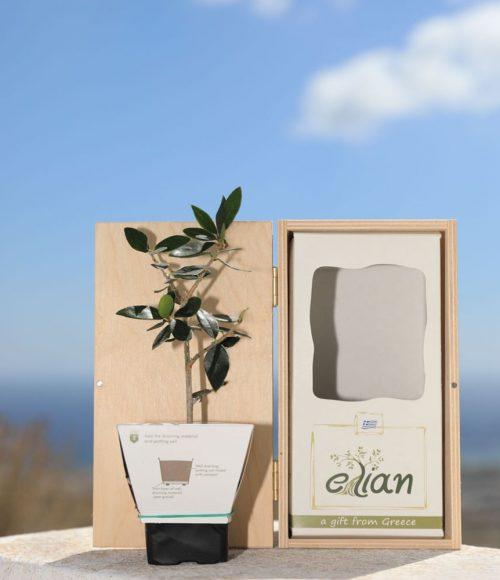 Ξύλινο Κουτί Δώρου Έλιαν 3
