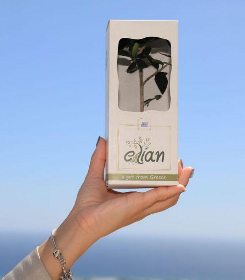 Έλιαν Δώρο Ελαιόδεντρου1