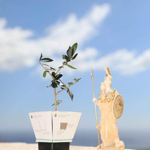 Ξύλινο κουτί με Ελληνικά Αγάλματα Θεών