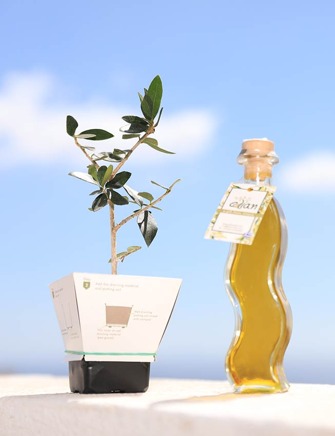 Small Olive oil sample of the product